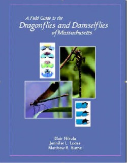Field Guide to Massachusetts Dragonflies and Damselflies